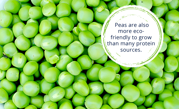 peas are also more eco-friendly to grow than many protein soruces